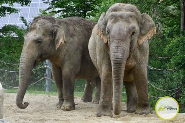 2020 05 11 Elefanten 20 Von 42.Jpeg