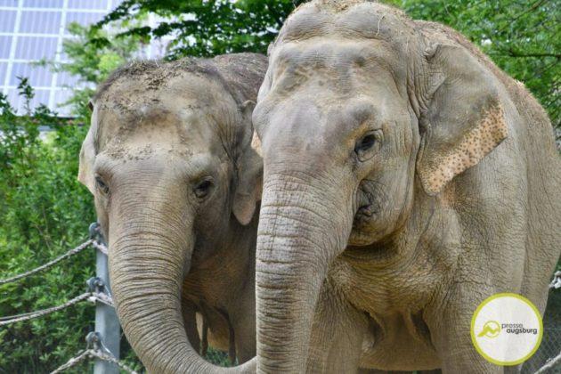 2020 05 11 Elefanten 21 Von 42.Jpeg
