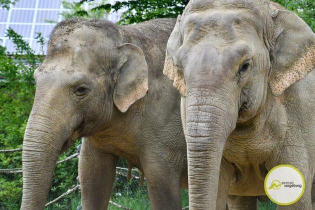 2020 05 11 Elefanten 22 Von 42.Jpeg