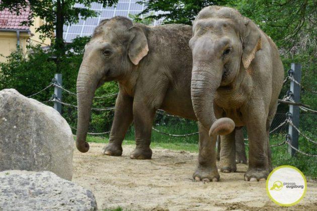 2020 05 11 Elefanten 23 Von 42.Jpeg
