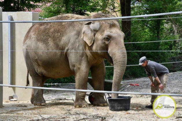 2020 05 11 Elefanten 25 Von 42.Jpeg