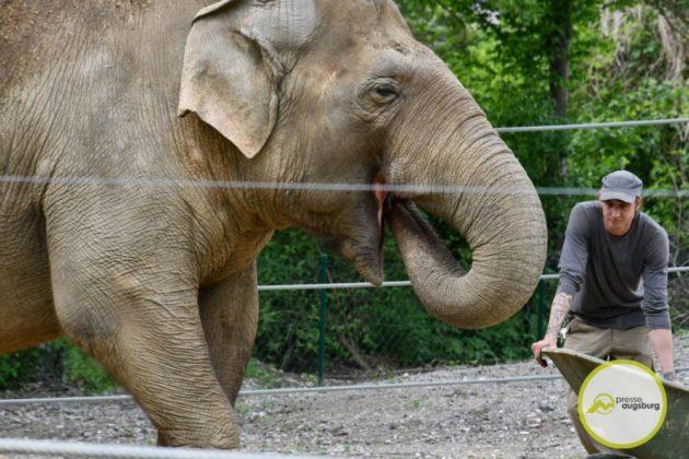 2020 05 11 Elefanten 27 Von 42.Jpeg