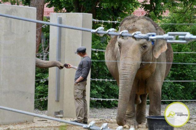2020 05 11 Elefanten 28 Von 42.Jpeg