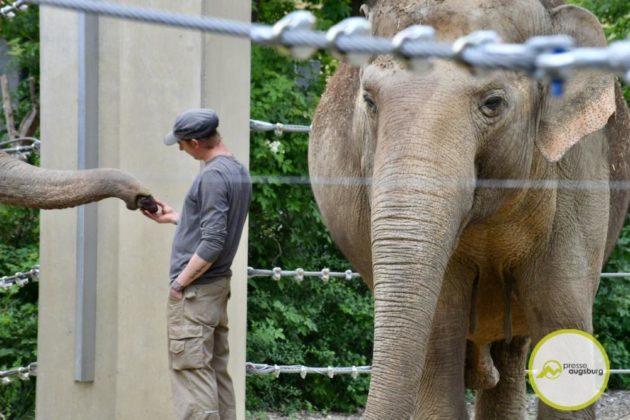 2020 05 11 Elefanten 29 Von 42.Jpeg