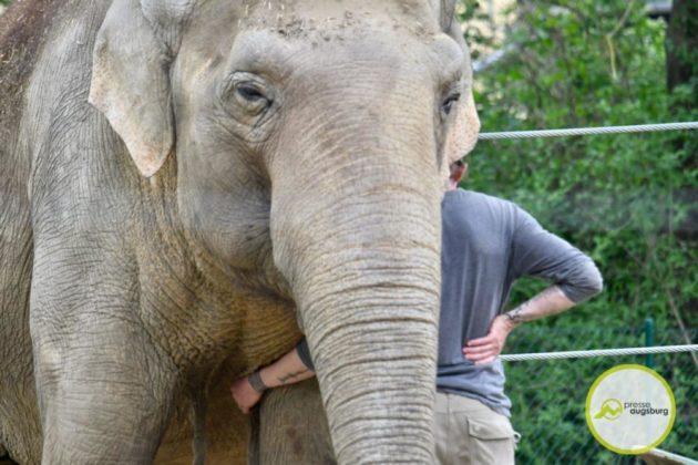 2020 05 11 Elefanten 30 Von 42.Jpeg