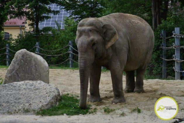 2020 05 11 Elefanten 31 Von 42.Jpeg