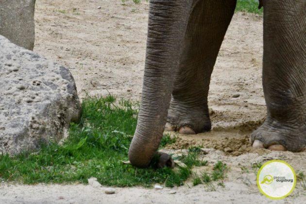 2020 05 11 Elefanten 32 Von 42.Jpeg