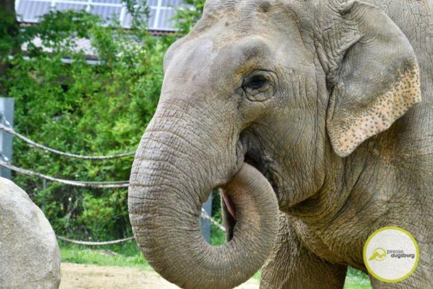 2020 05 11 Elefanten 33 Von 42.Jpeg
