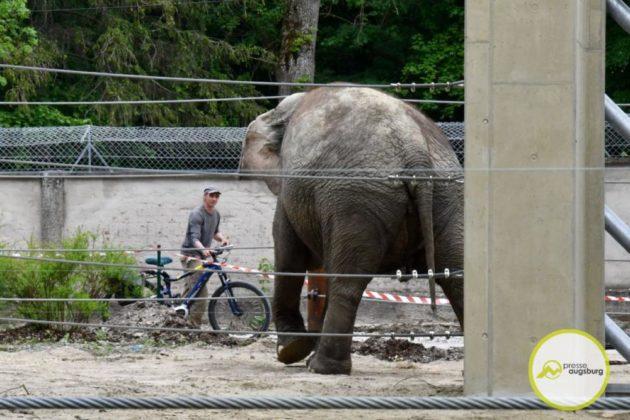 2020 05 11 Elefanten 37 Von 42.Jpeg