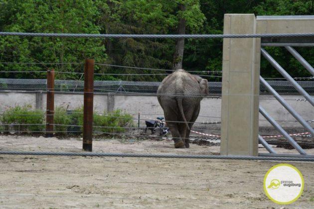 2020 05 11 Elefanten 38 Von 42.Jpeg