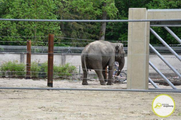 2020 05 11 Elefanten 39 Von 42.Jpeg