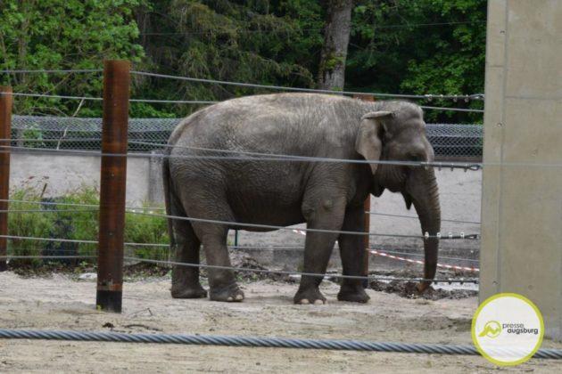 2020 05 11 Elefanten 40 Von 42.Jpeg