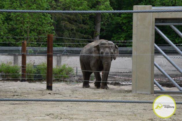 2020 05 11 Elefanten 41 Von 42.Jpeg