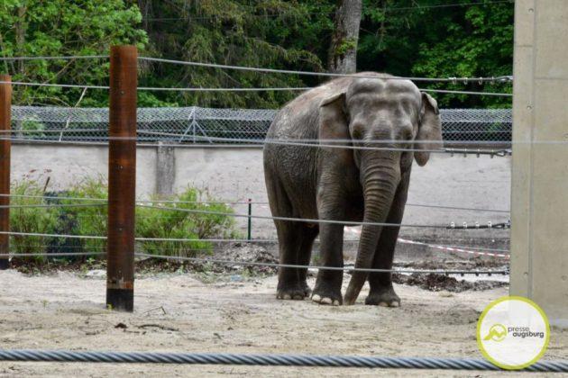 2020 05 11 Elefanten 42 Von 42.Jpeg
