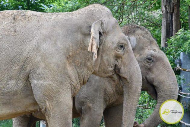 2020 05 11 Elefanten 9 Von 42.Jpeg
