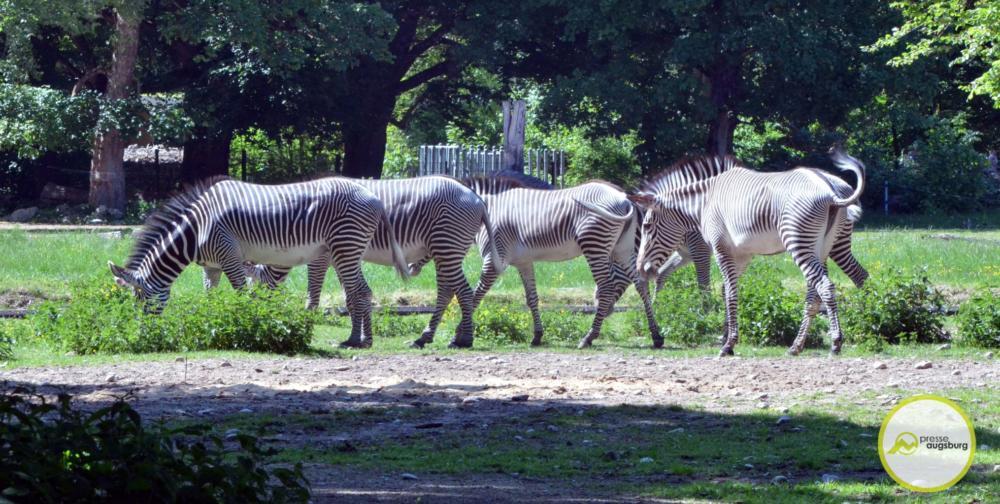 20200517 Zoo 46