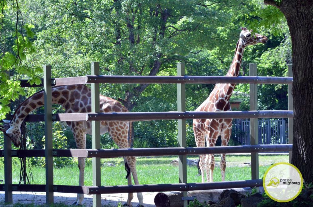 20200517 Zoo 53