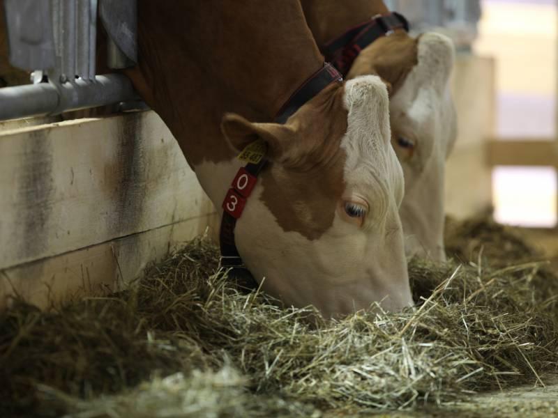 Cdu Agrarpolitiker Verbot Von Werkvertraegen Gefaehrdet Tierhaltung