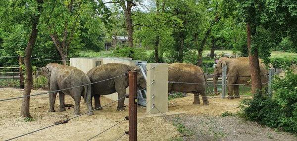 unnamed-1 Zoo Augsburg | Die Elefanten nähern sich an Augsburg Stadt Freizeit News Newsletter Zoo Augsburg Elefant Zoo Augsburg |Presse Augsburg