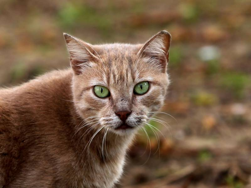 Katzen Profitieren Von Coronakrise