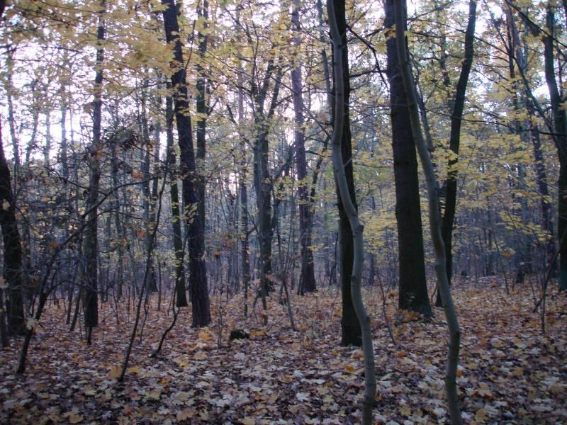 Gruene Fordern Milliardenprogramm Zum Schutz Des Waldes