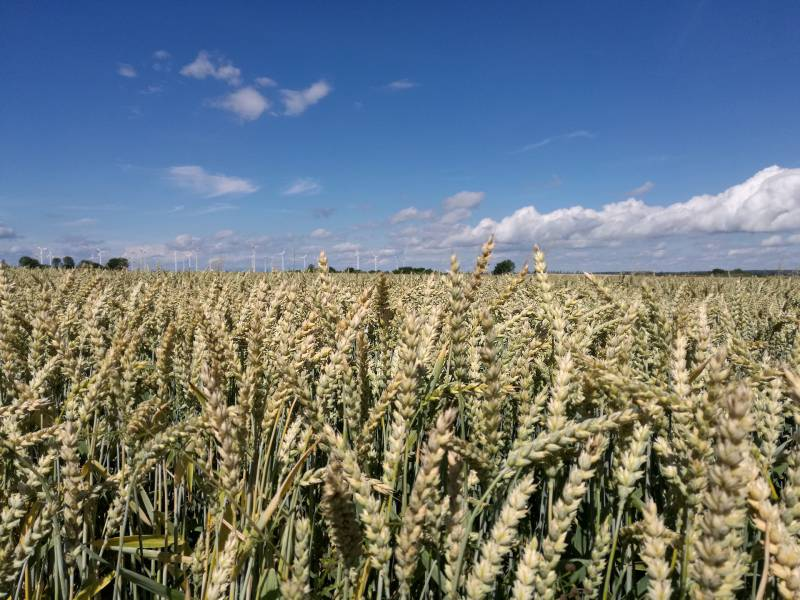 Bericht Illegale Pestizide Auf Grenzmarkt In Polen Verkauft