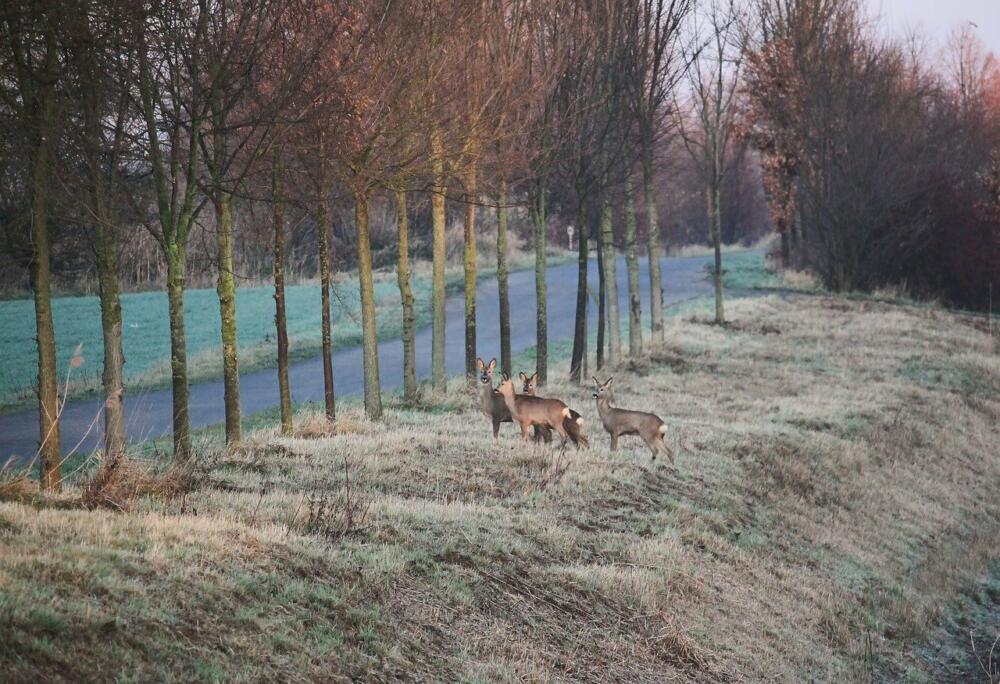 deer-2053105_1280 Mehrere Wildunfälle im Landkreis Dillingen an der Donau Dillingen News Polizei & Co |Presse Augsburg