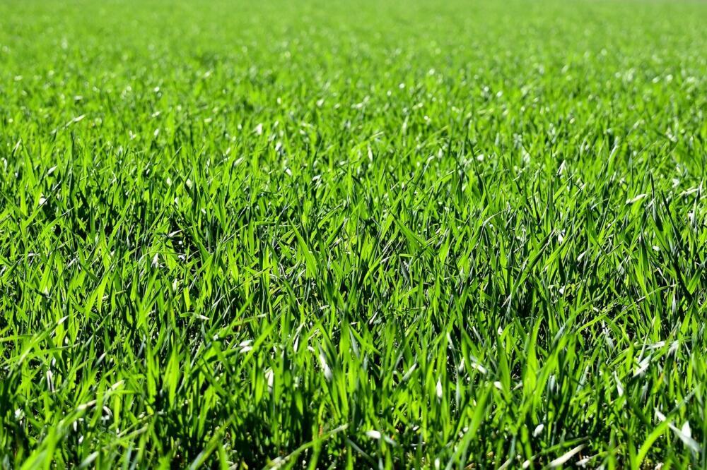 Meadow 2184989 1280