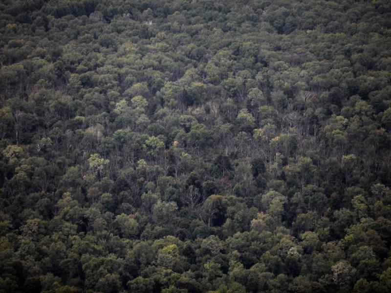 Mindestens 314 Hektar Wald Im Jahr 2020 Bei Braenden Vernichtet