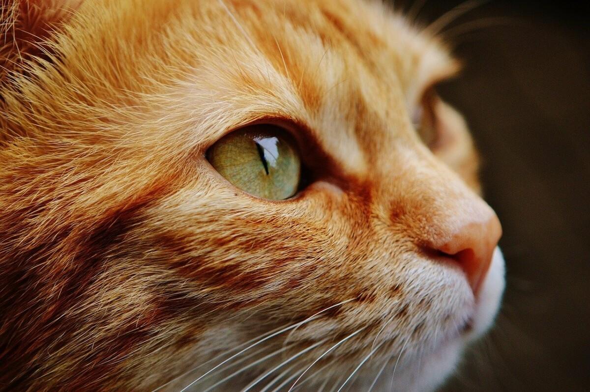 Cat 1455468 1280