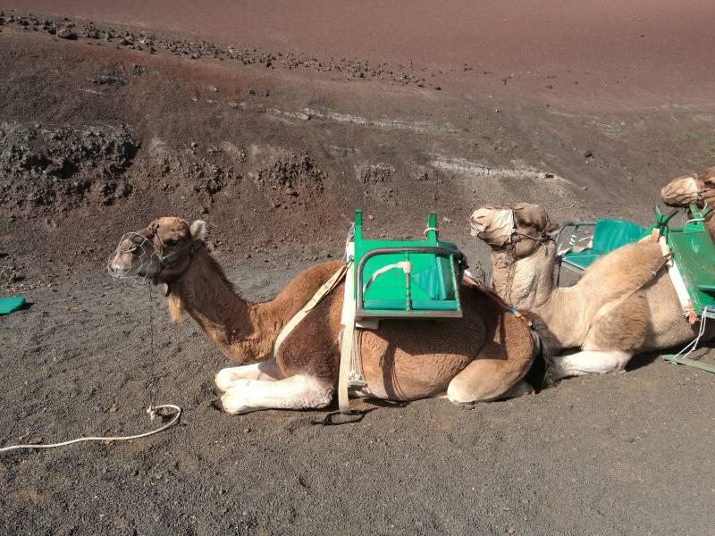 Habeck Vergleicht Soeder Mit Einem Kamel