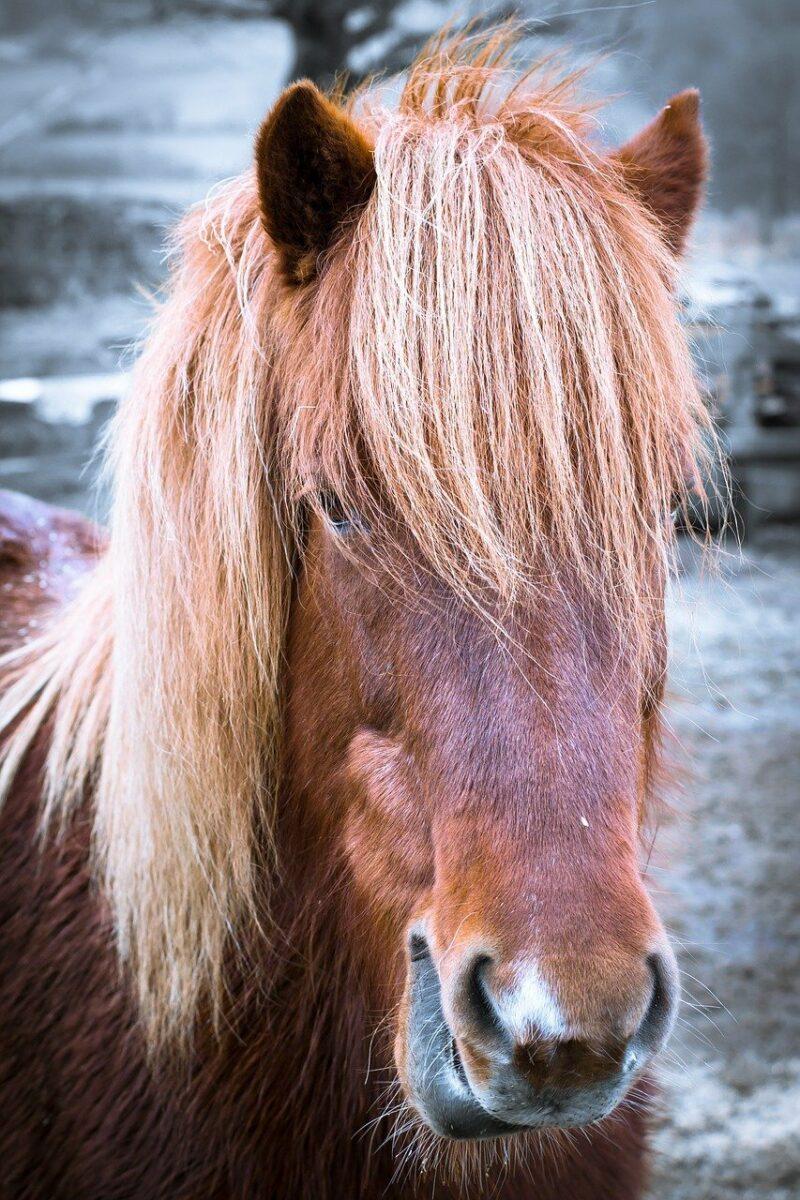 Horse 1967768 1280 Scaled