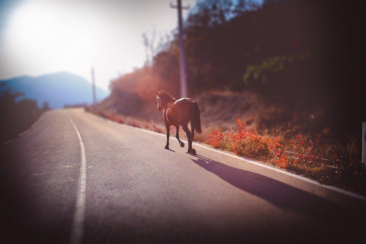 Horse 5380933 1280