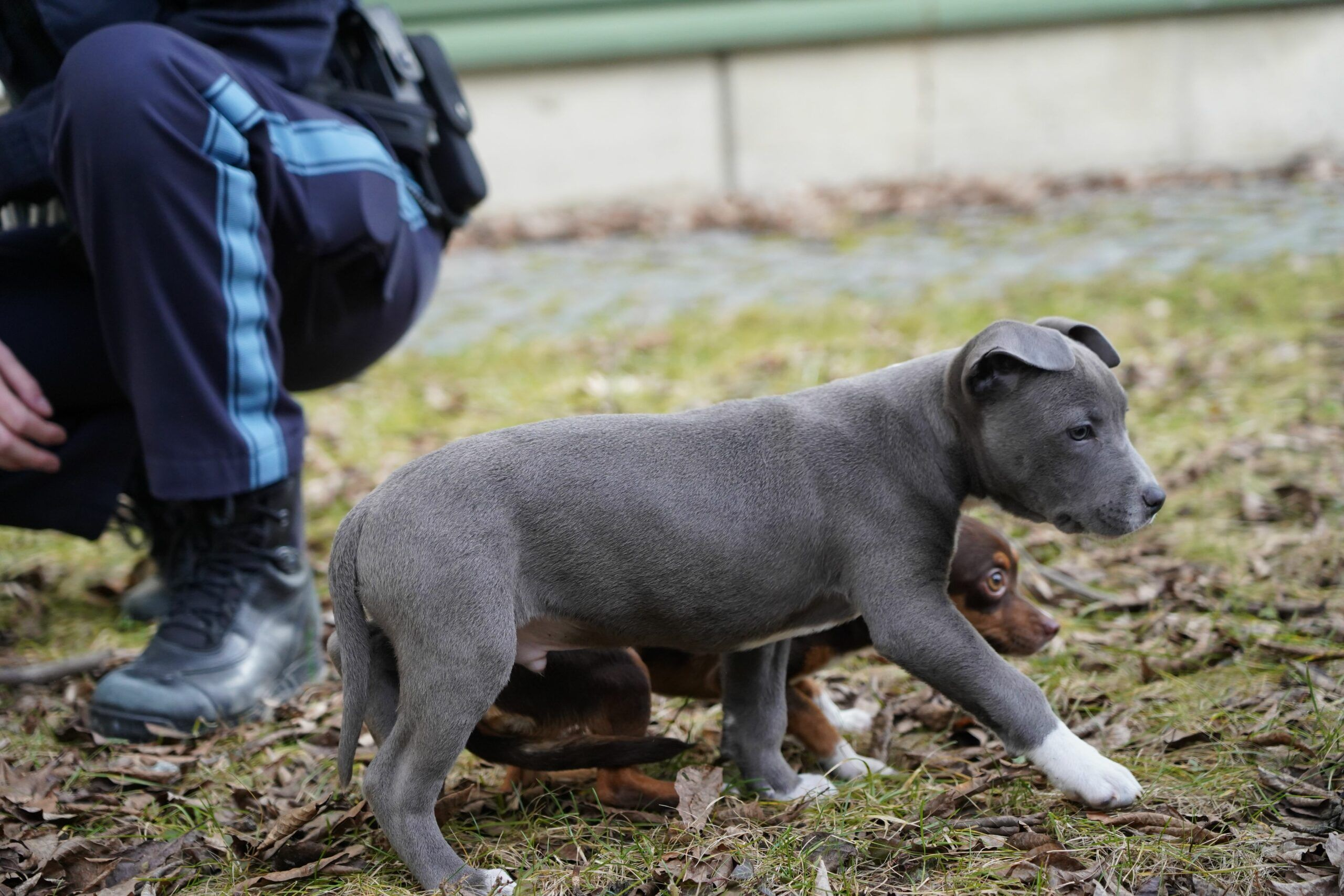 2021 02 19 Kempten Hundewelpenpolizei Scaled