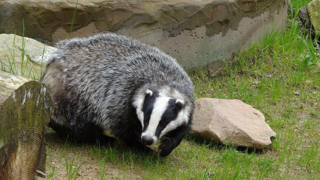 Badger 44204 1280