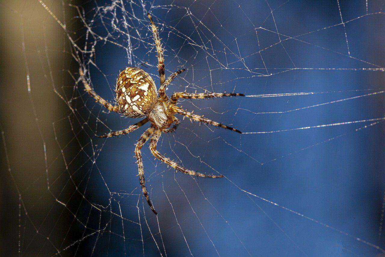Spider 5477023 1280