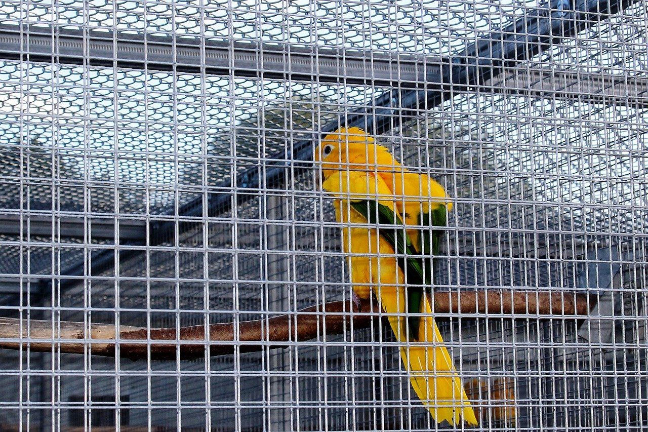 Captivity 469746 1280