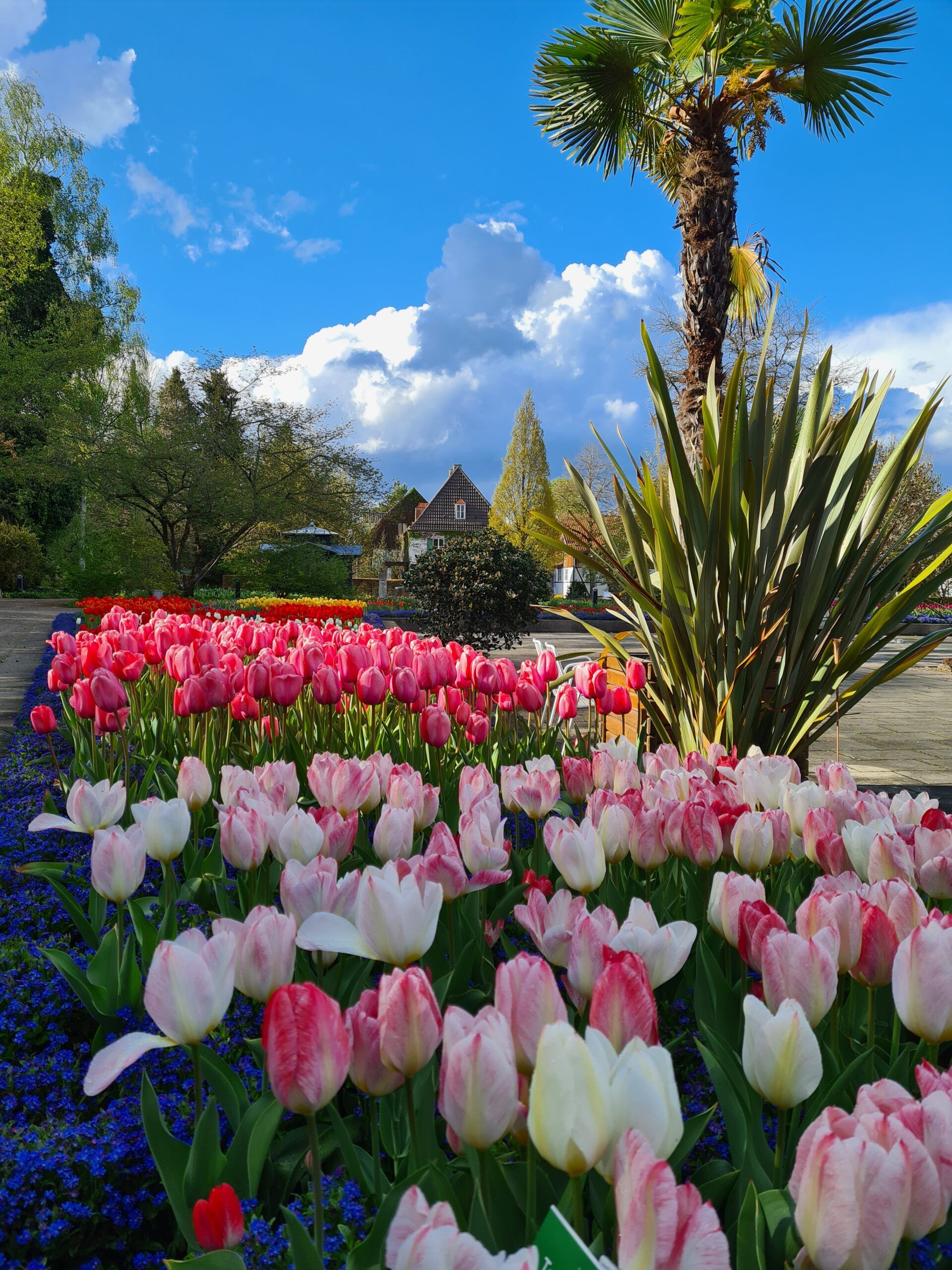 2 05 10 Bild 1 Bot Garten Tulpen Scaled
