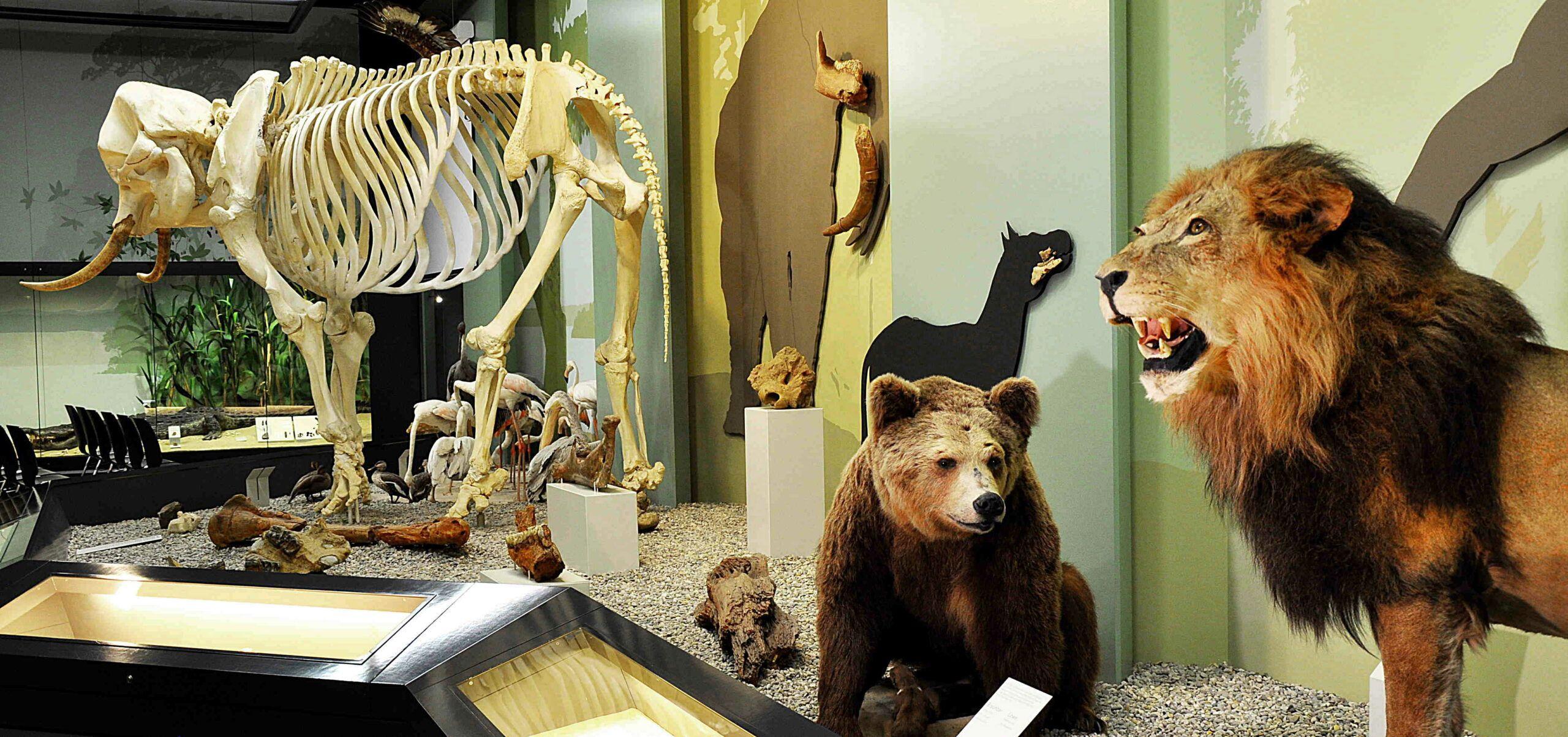 3 Naturmuseum Molaso A. Hagens 20 Scaled