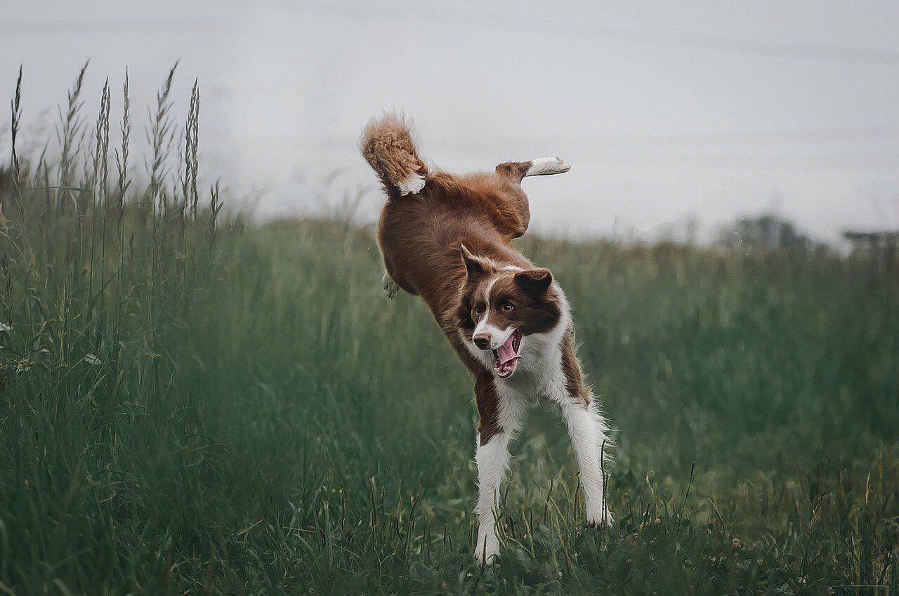 Dog 4441585 1280