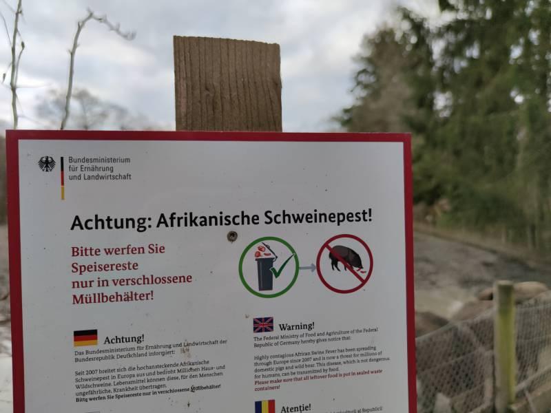 Dritter Fall Von Afrikanischer Schweinepest In Deutschland