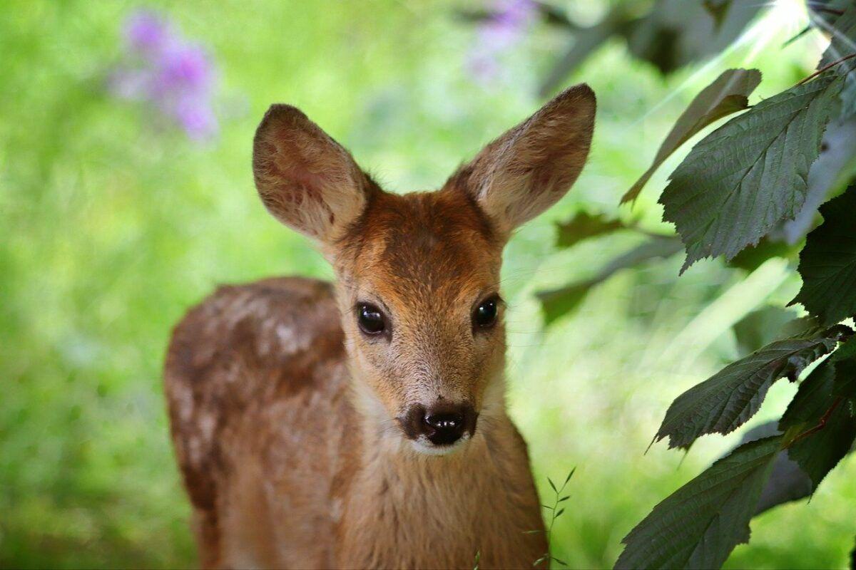 Deer 4344374 1280